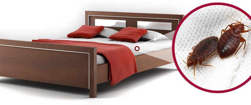 Csgnet disinfestazione servizi di pest control in calabria - Cimici da letto vestiti ...