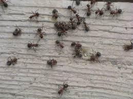 banner di formiche