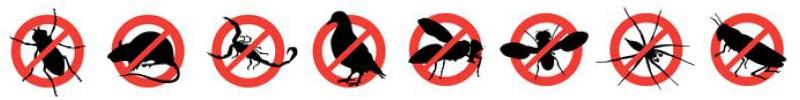 banner insetti Disinfestazione per Aziende attività commerciali