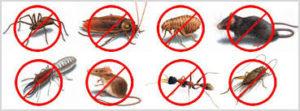 disinfestazione insetti volatili stricianti
