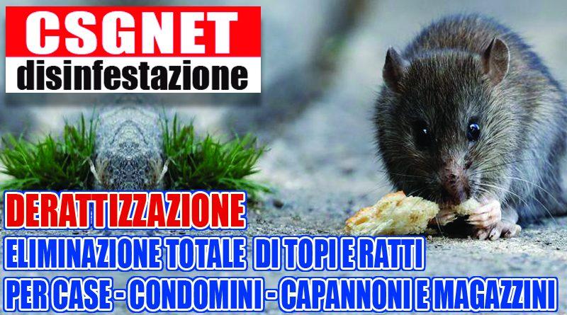 Derattizzazione topi & ratti